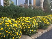 Commercial & Residential Landscaping Services Kansas City,  MO